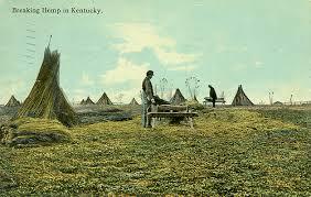 Hemp Field Old Kentucy images